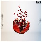 No worries / STEREO DIVE FOUNDATION